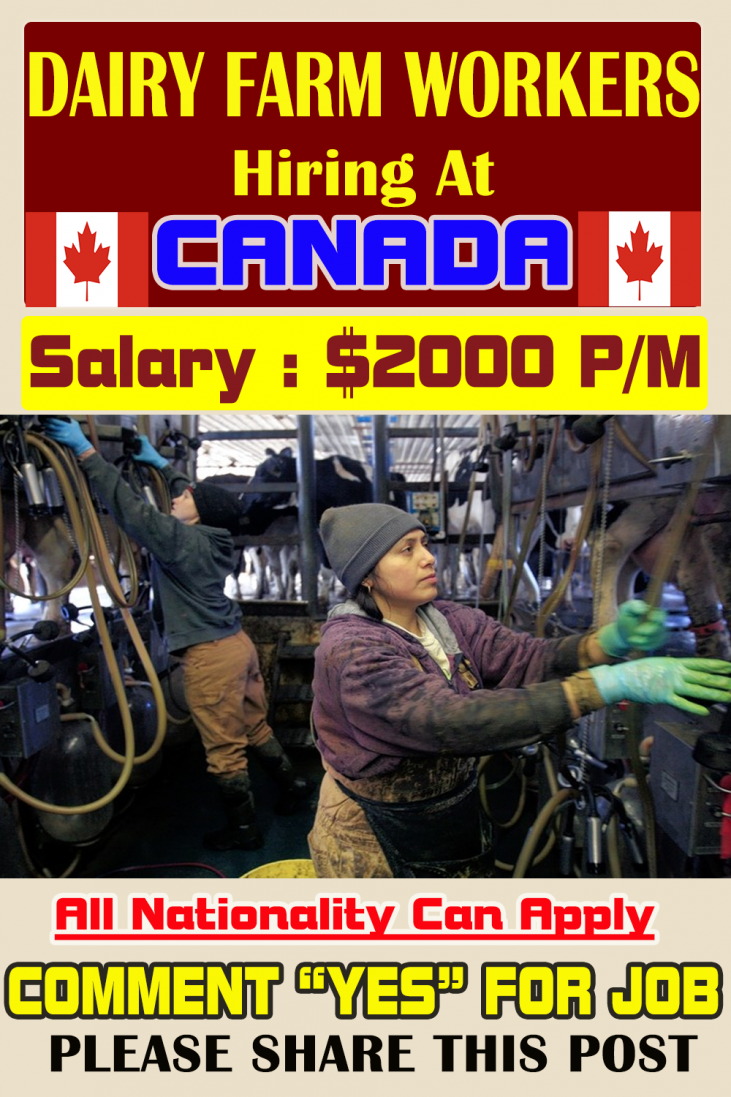 Dairy farm employees needed to take advantage of 450 cows double daily. Must be willing to figure a split shift; min. fifty hours/week; alternative duties embody cleansing barns and pens, general farm connected duties.
