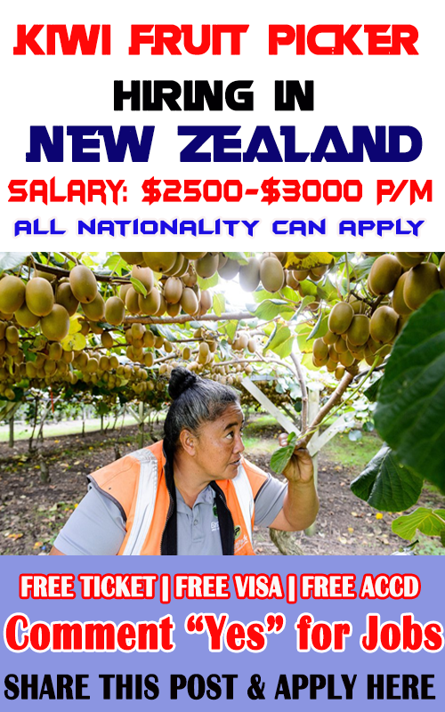 Kiwi Pickers hiring in New Zealand