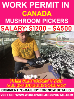 Mushroom Pickers Wanted in Canada